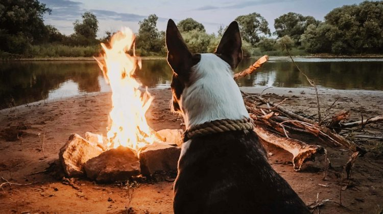 river camping with dog